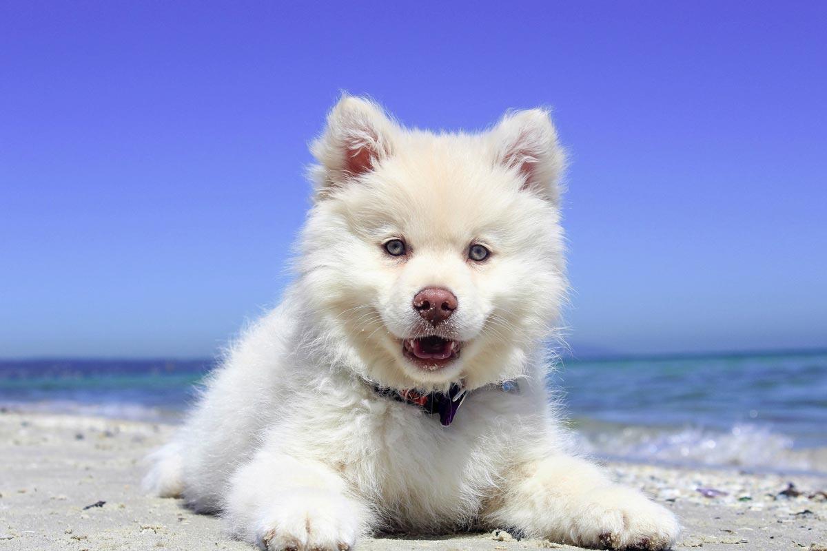 Conseils vacance chien