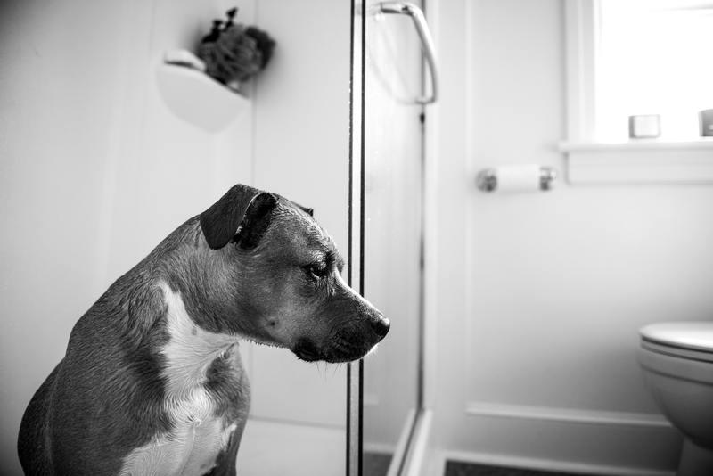 toilettage chien