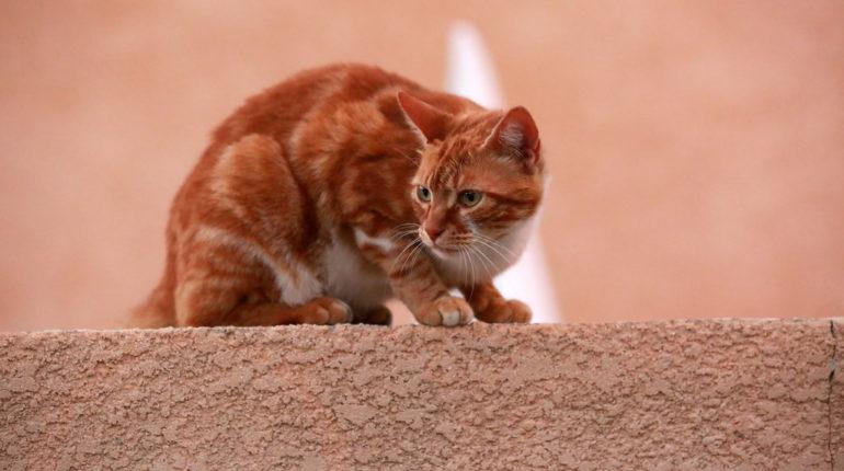 clinique vétérinaire pour chats à Outremont