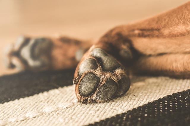 nettoyage patte de chien