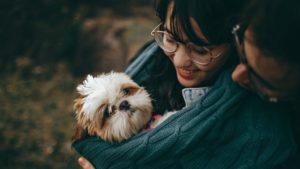 Compagnie d'un chien durant les voyages