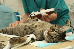 Faire stériliser son chat