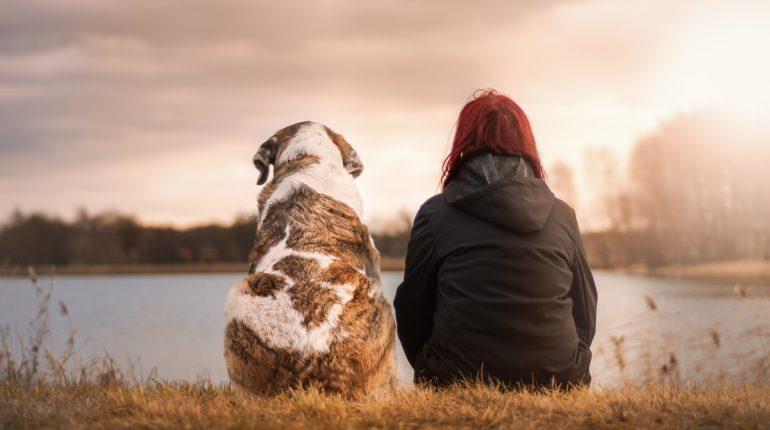 Adopter-un-chien