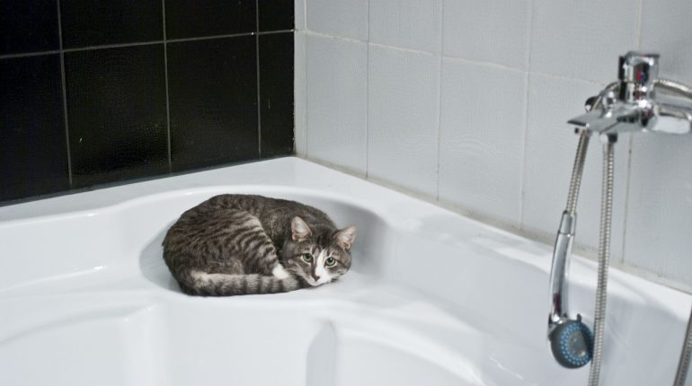 toilettage de chat