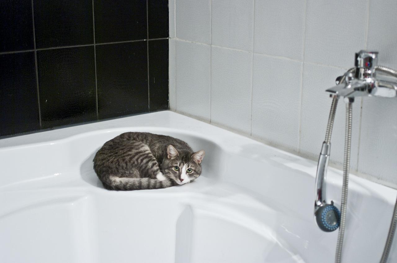 toilettage de chat