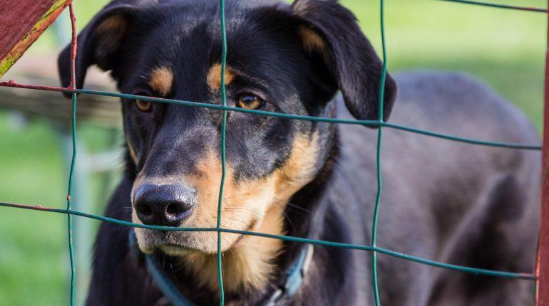 Un chien dans un refuge